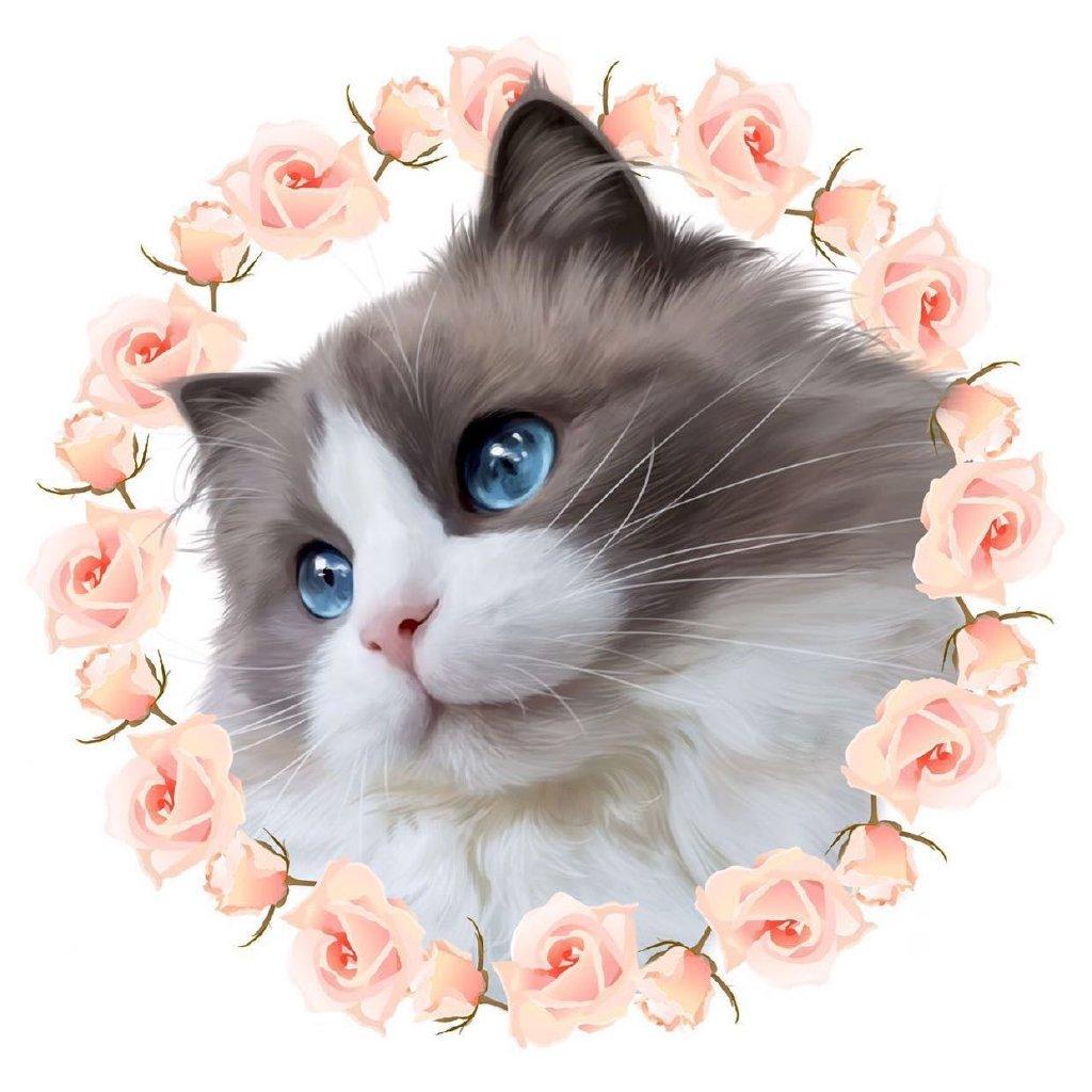 londondoll布偶猫舍
