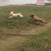 刘秀华2715637135,发布寻狗启示热爱宠物狗狗,希望流浪狗回家的狗主人。