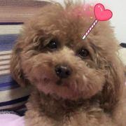 思奇siqi516,发布寻狗启示热爱宠物狗狗,希望流浪狗回家的狗主人。