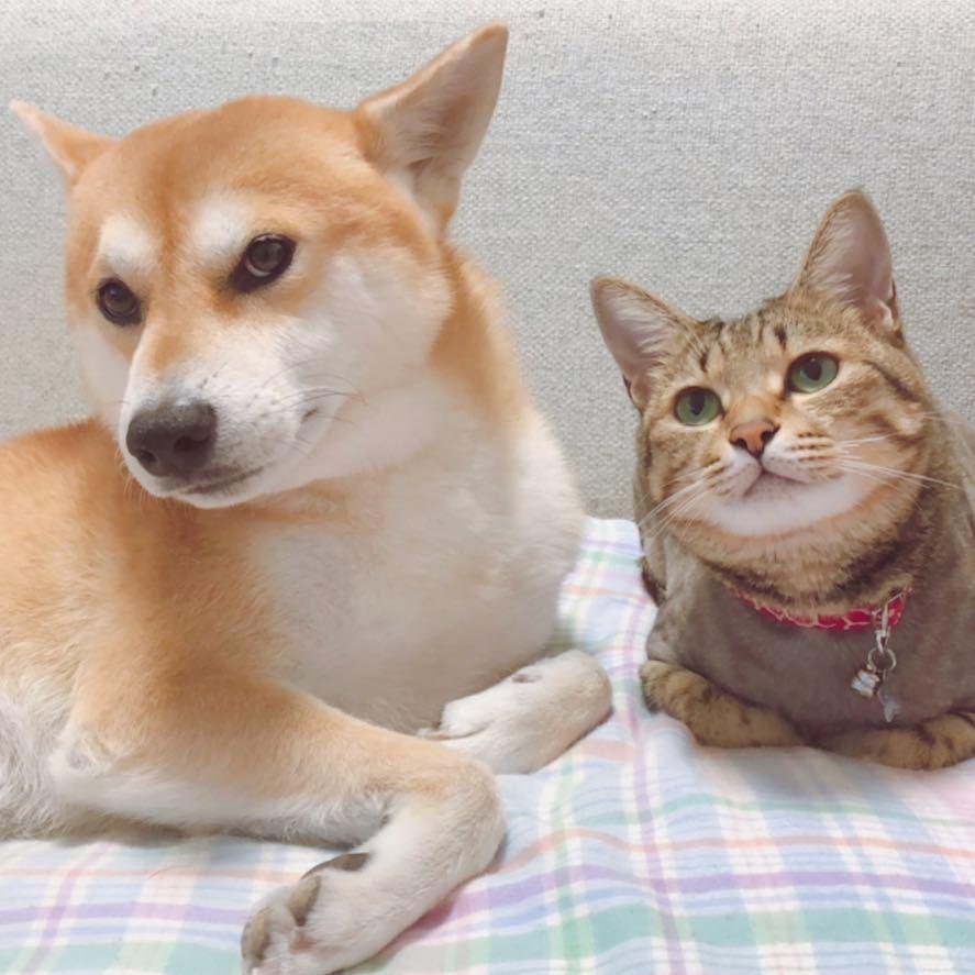 全是猫狗图片
