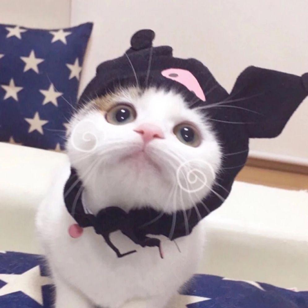 迪丽热巴可爱猫咪图片