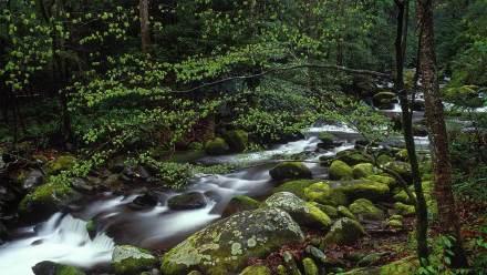 大烟山国家公园中的咆哮溪
