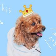 当地球没有花S,发布寻狗启示热爱宠物狗狗,希望流浪狗回家的狗主人。