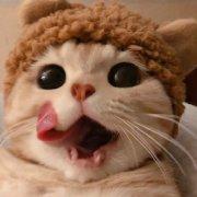 绝美小猫咪激情招商中微博照片