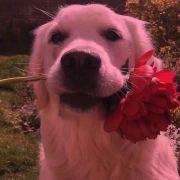 找不到了了吧ZZZ,发布寻狗启示热爱宠物狗狗,希望流浪狗回家的狗主人。