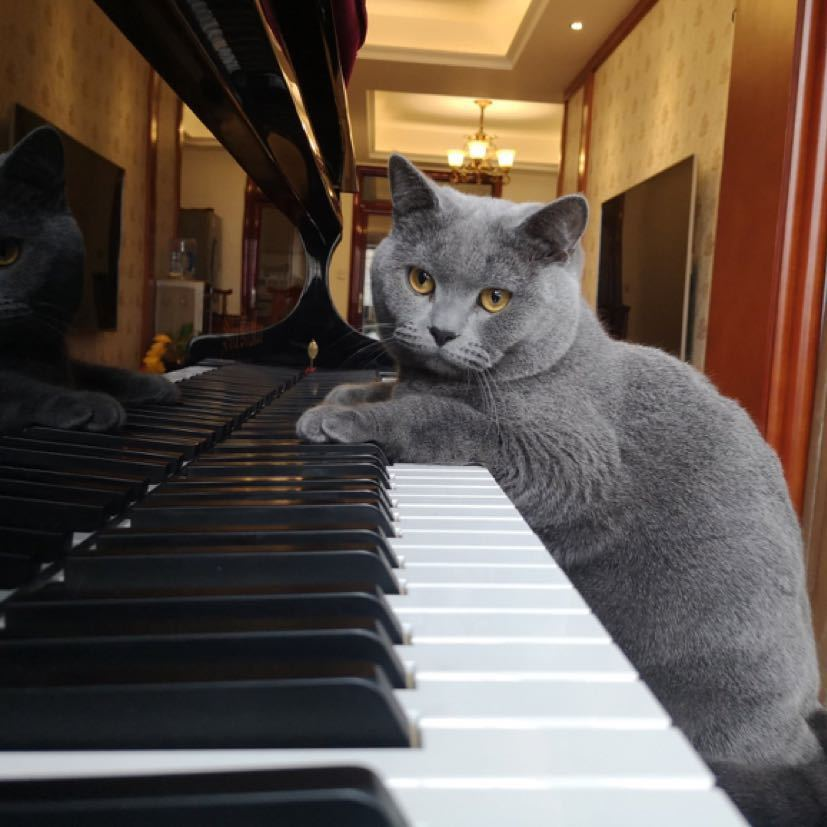 杰伦的钢琴