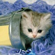 迷途猫玩数码