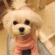 王小豆沙微博照片