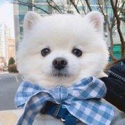 宠物联萌微博照片