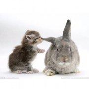 猫咪酱与兔子君