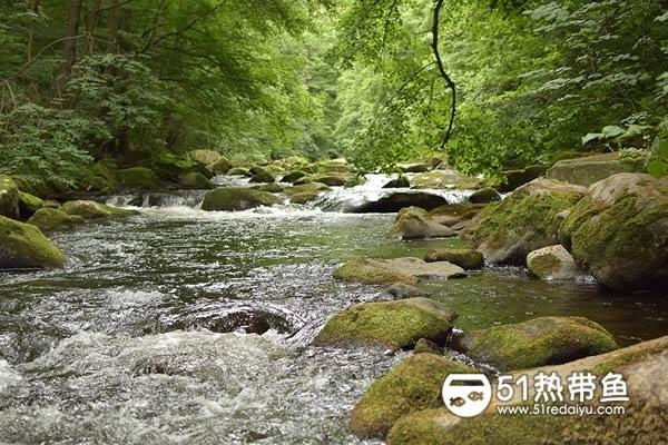 自然界中的河水