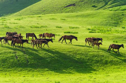 一群小羊在草原上奔跑