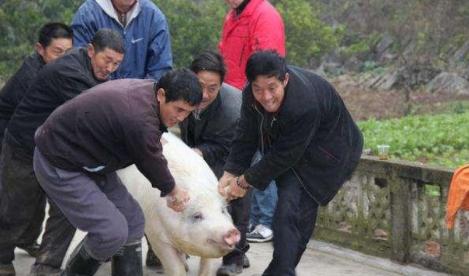 童年忆事 / 杀年猪