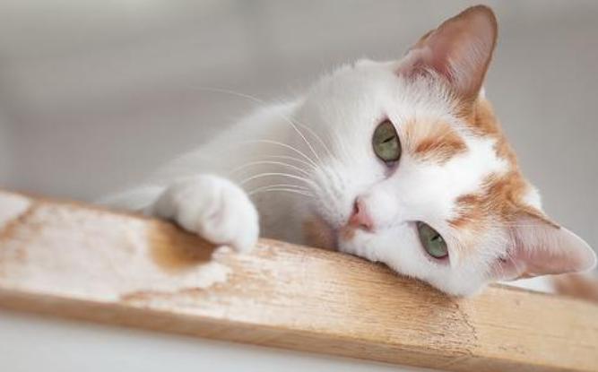 那只来碰瓷的猫