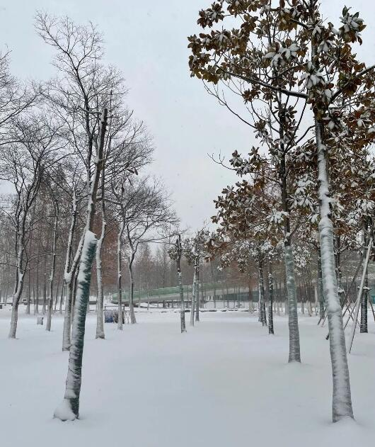 涨姿势积雪的图片
