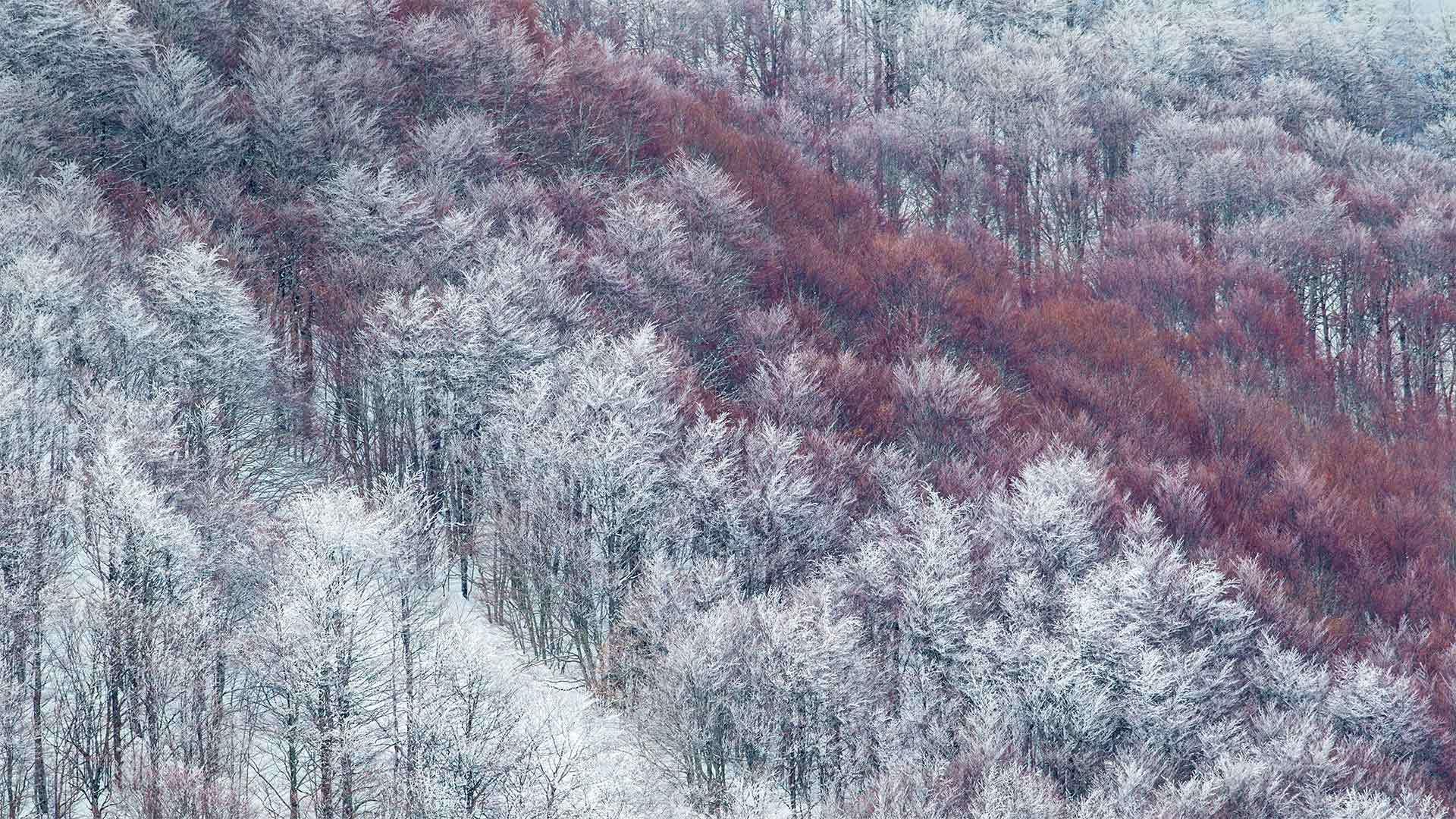部分被雪覆盖的Val Cervara山坡上的老山毛榉林Val Cervara山坡