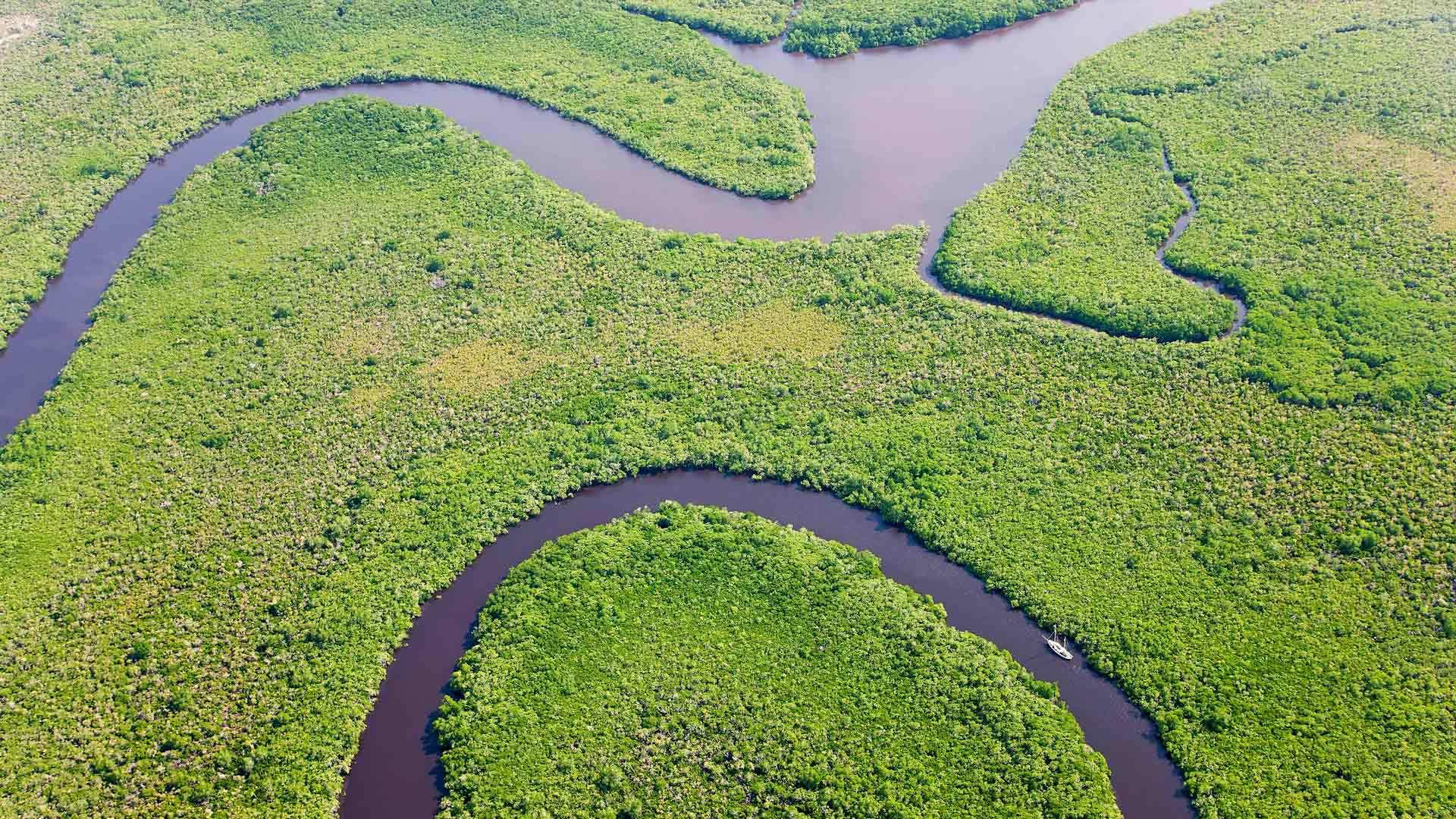 鸟瞰雨林和丹特里河