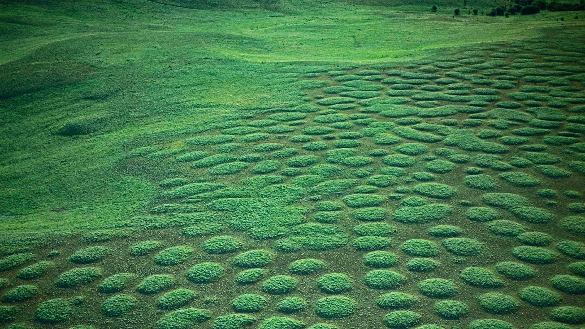 俄勒冈州Zumwalt Prairie的草原土墩