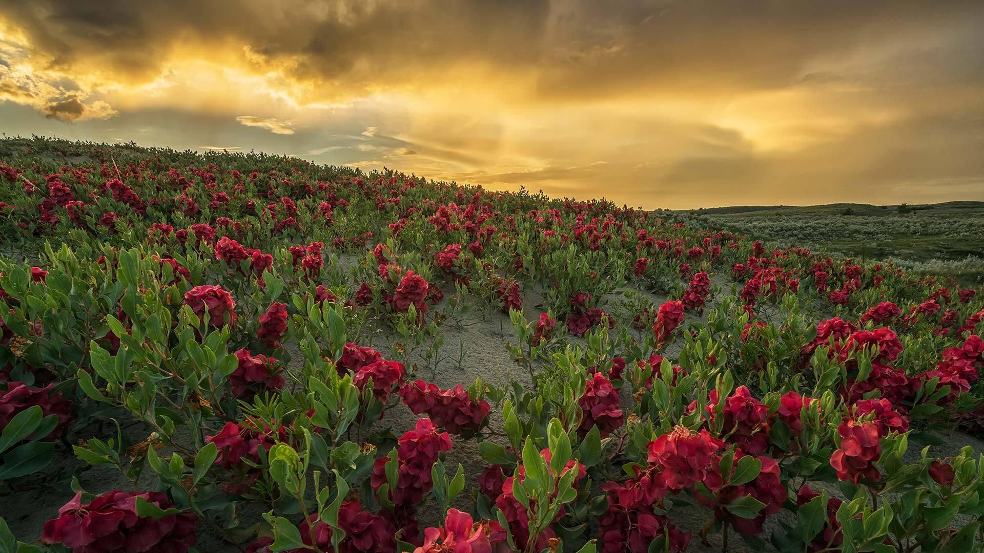 大沙丘上的日落