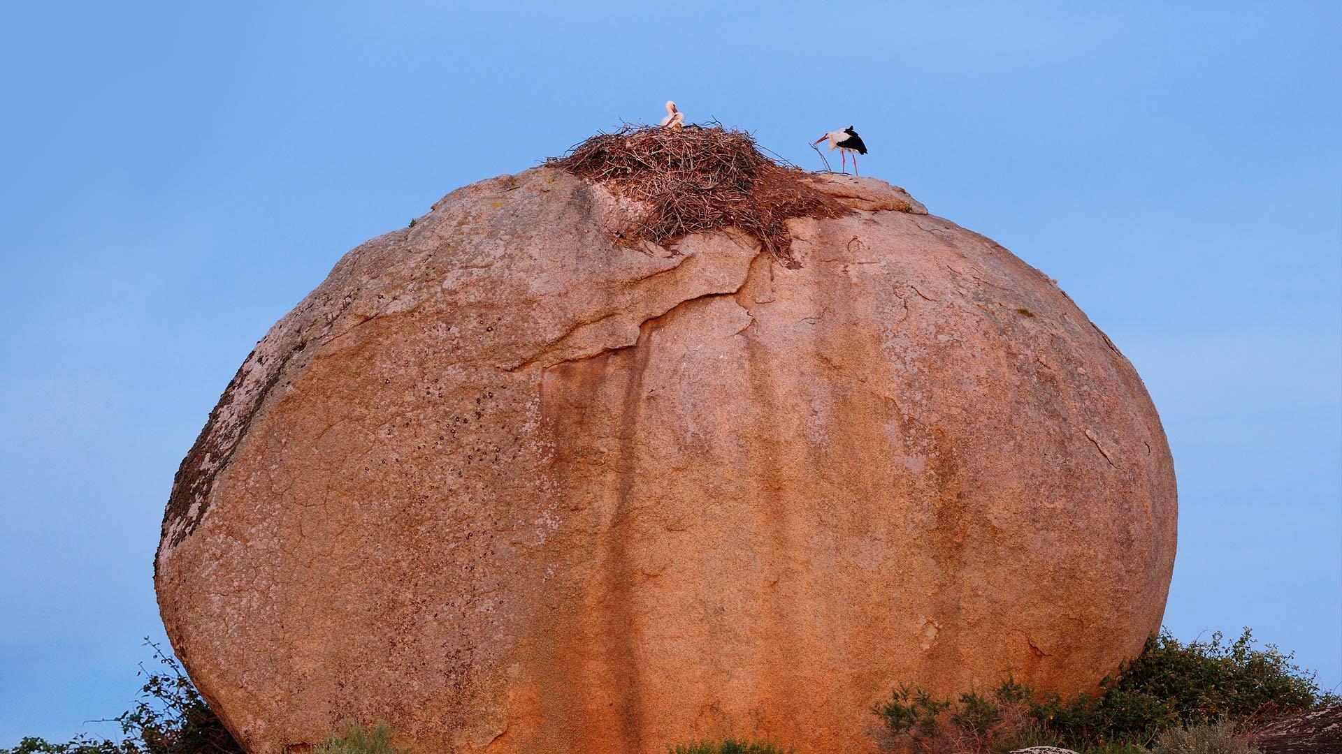 洛斯巴鲁埃科斯自然纪念碑上的白鹳