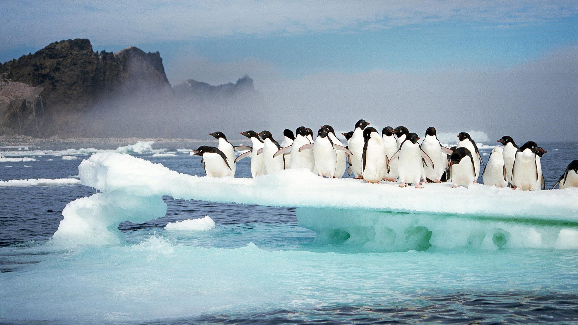 珀泽申群岛上的阿德利企鹅
