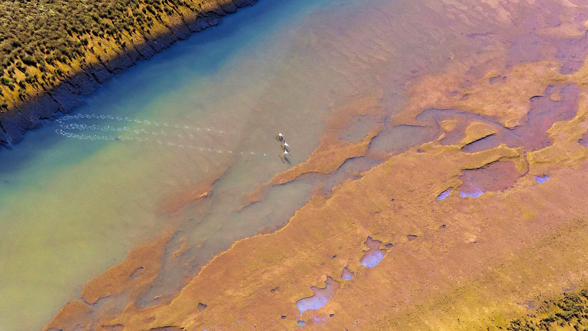 韦尔瓦奥迪尔湿地起飞的三只大红鹳