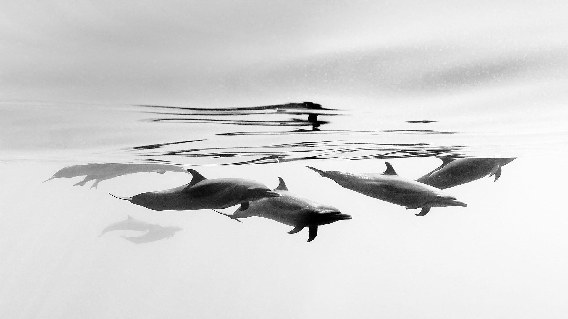 伊斯塔帕海岸的热带斑海豚热带斑海豚