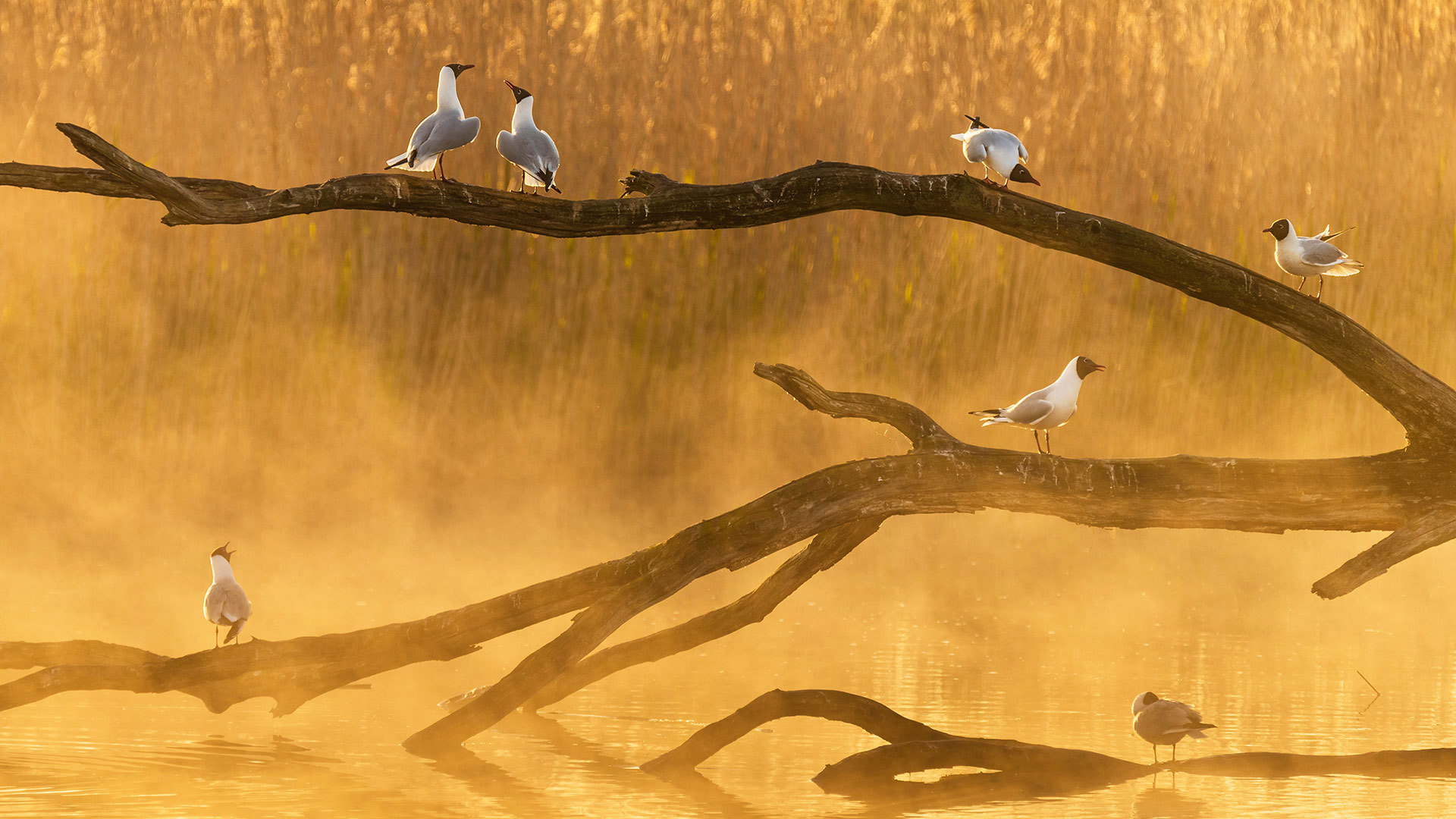 La Brenne的海鸥la brenne