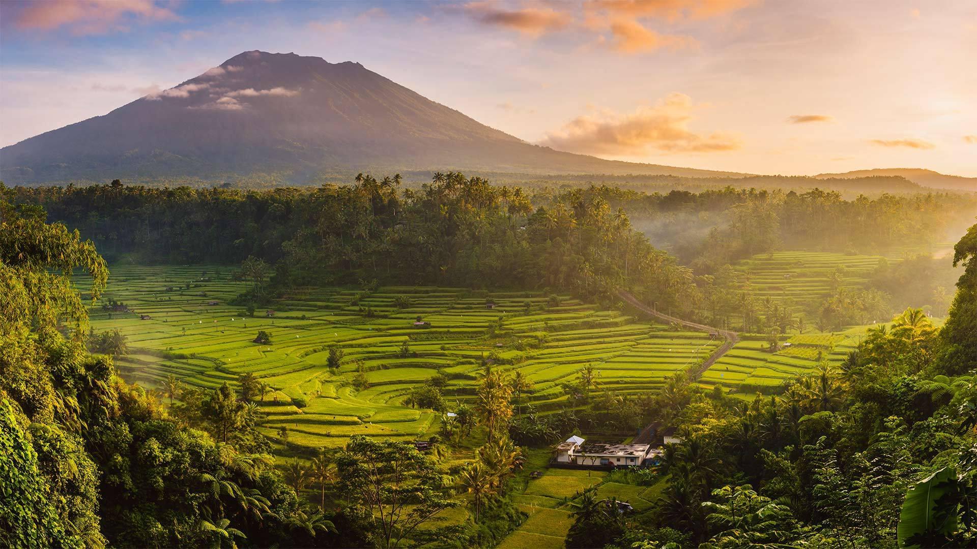 以阿贡火山为背景Sidemen山谷中的稻田阿贡火山