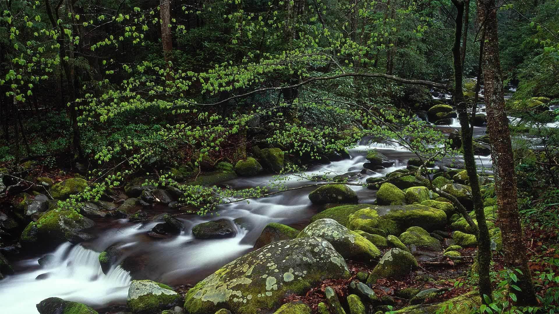 大烟山国家公园中的咆哮溪大烟山国家公园