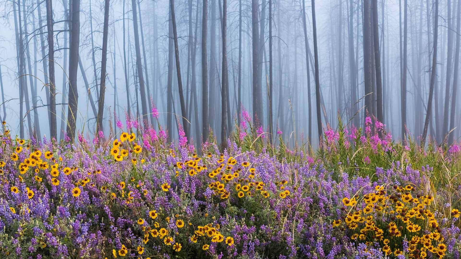 火灾烧毁大部分森林后凯尔特河野营地