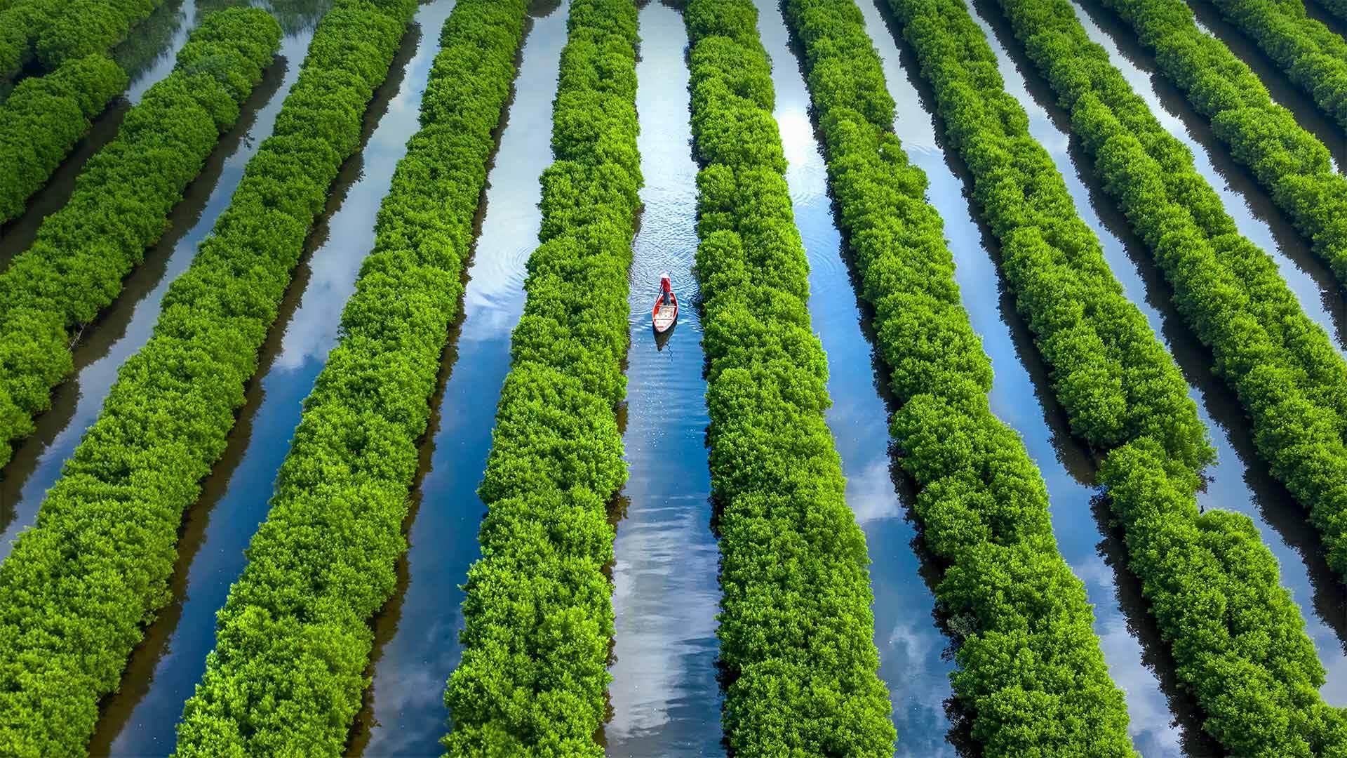 Bàu Cá Cái的红树林越南广义