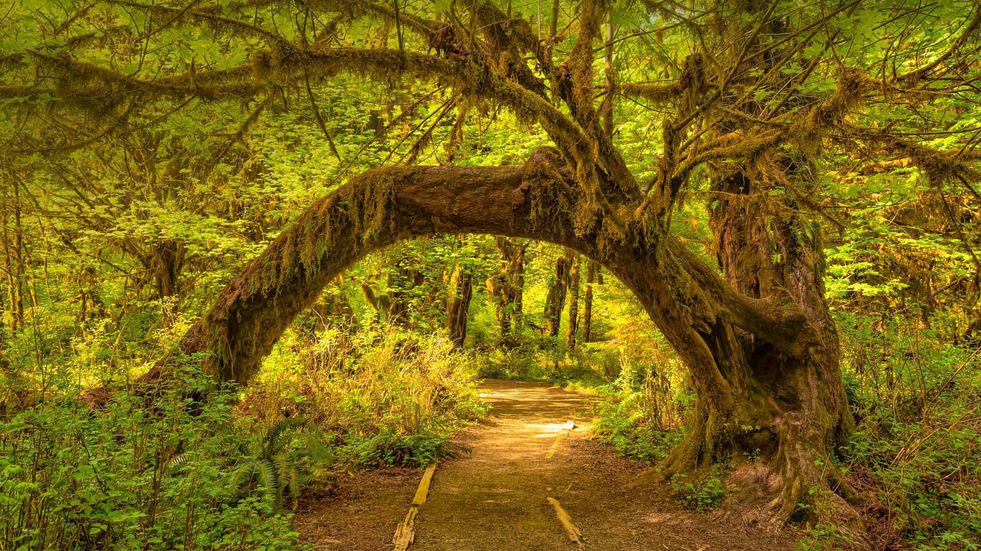 奥林匹克国家公园中的可可西里雨林可可西里雨林