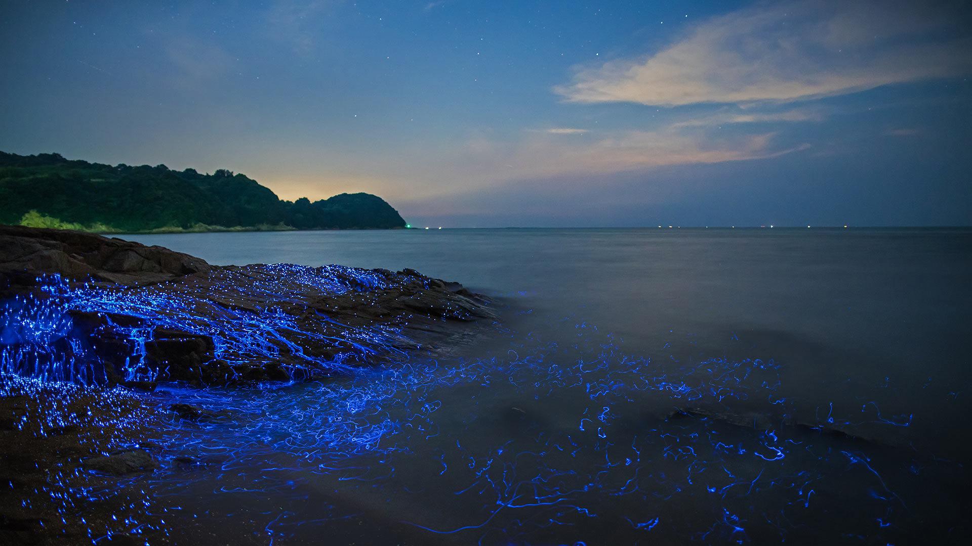 冈山沿岸的发光海洋萤火虫海洋萤火虫