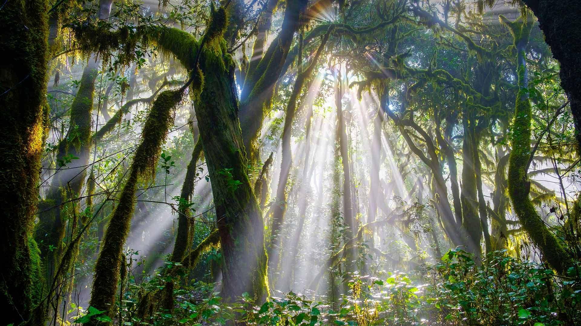 阳光穿透加拉霍奈国家公园中的森林戈梅拉岛