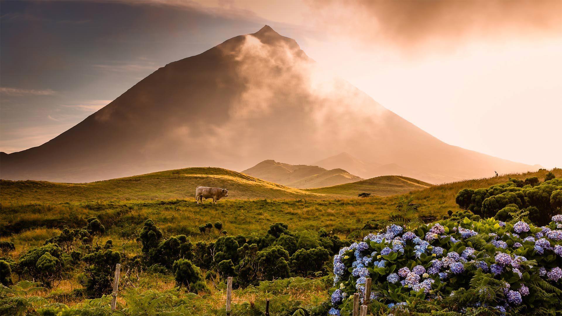 一头公牛站在皮库山前的田野中皮库山
