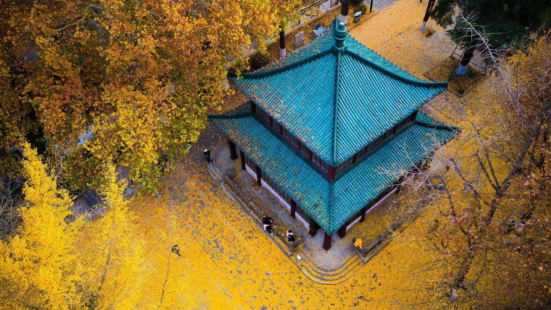 玄武湖公园的金色银杏叶玄武湖公园