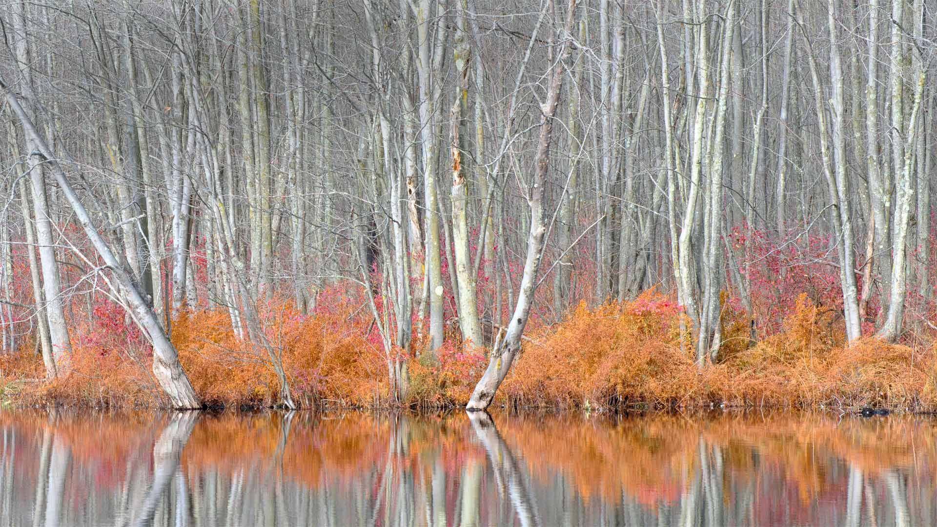比弗湖自然中心内光秃秃的树和红盖鳞毛蕨比弗湖