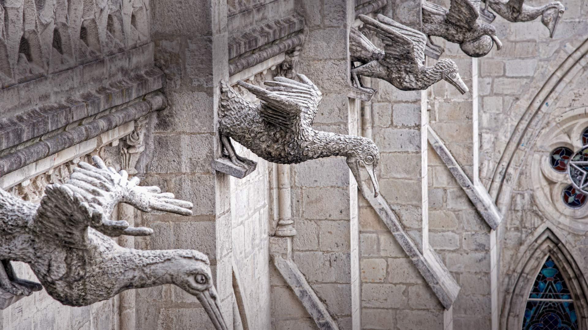 国家誓言圣殿上怪诞的厄瓜多尔本土海鸟国家誓言圣殿