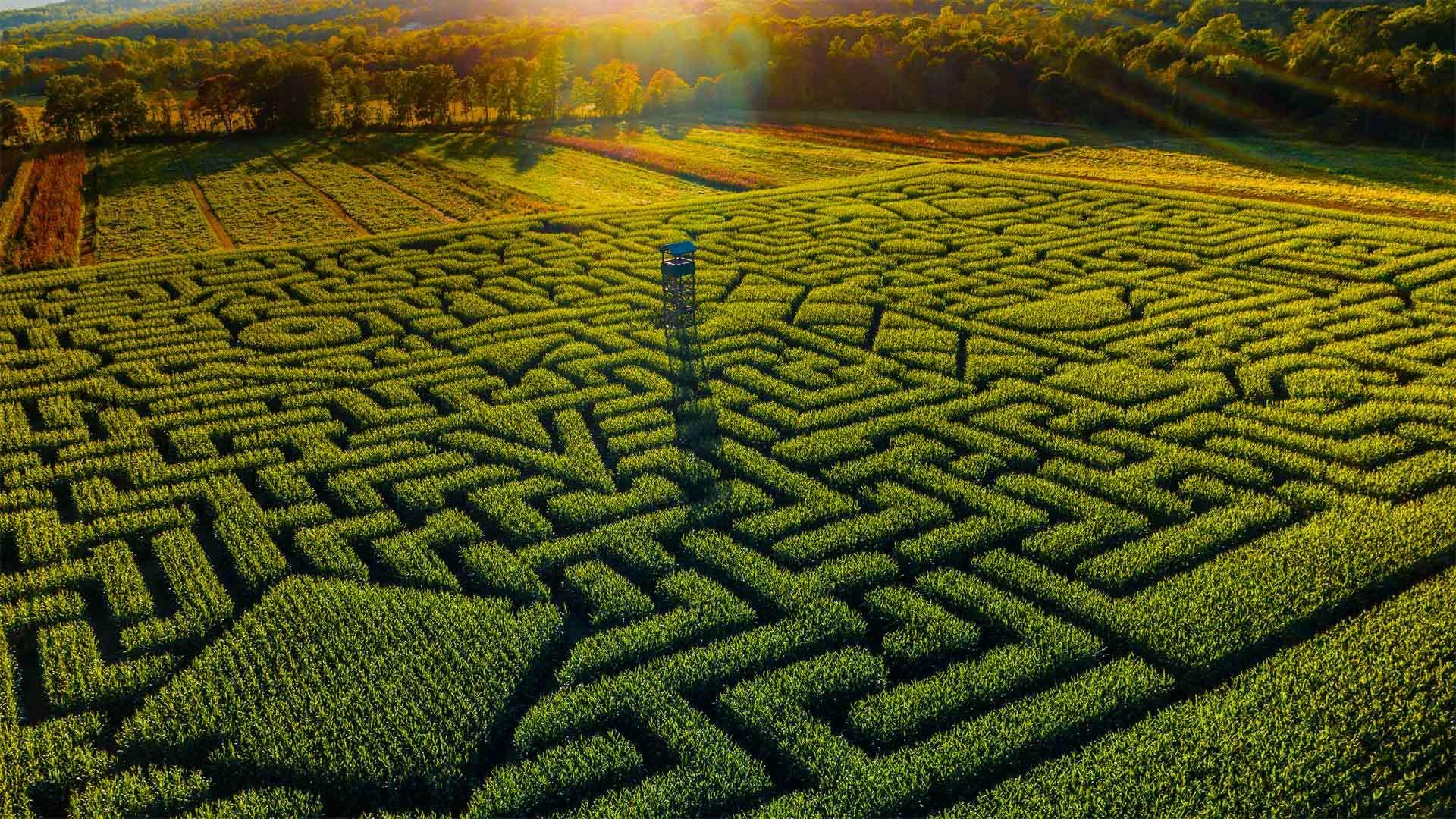 克林格尔农场的Mazezilla玉米田迷宫克林格尔农场