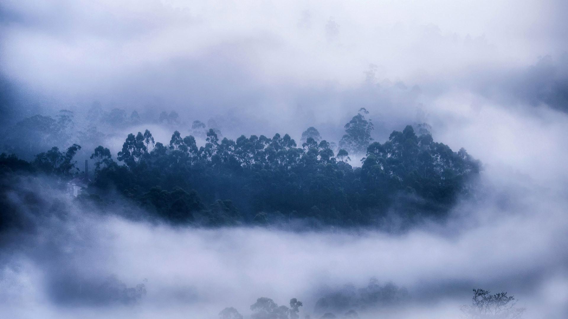 雾气环绕的森林喀拉拉邦慕那尔市