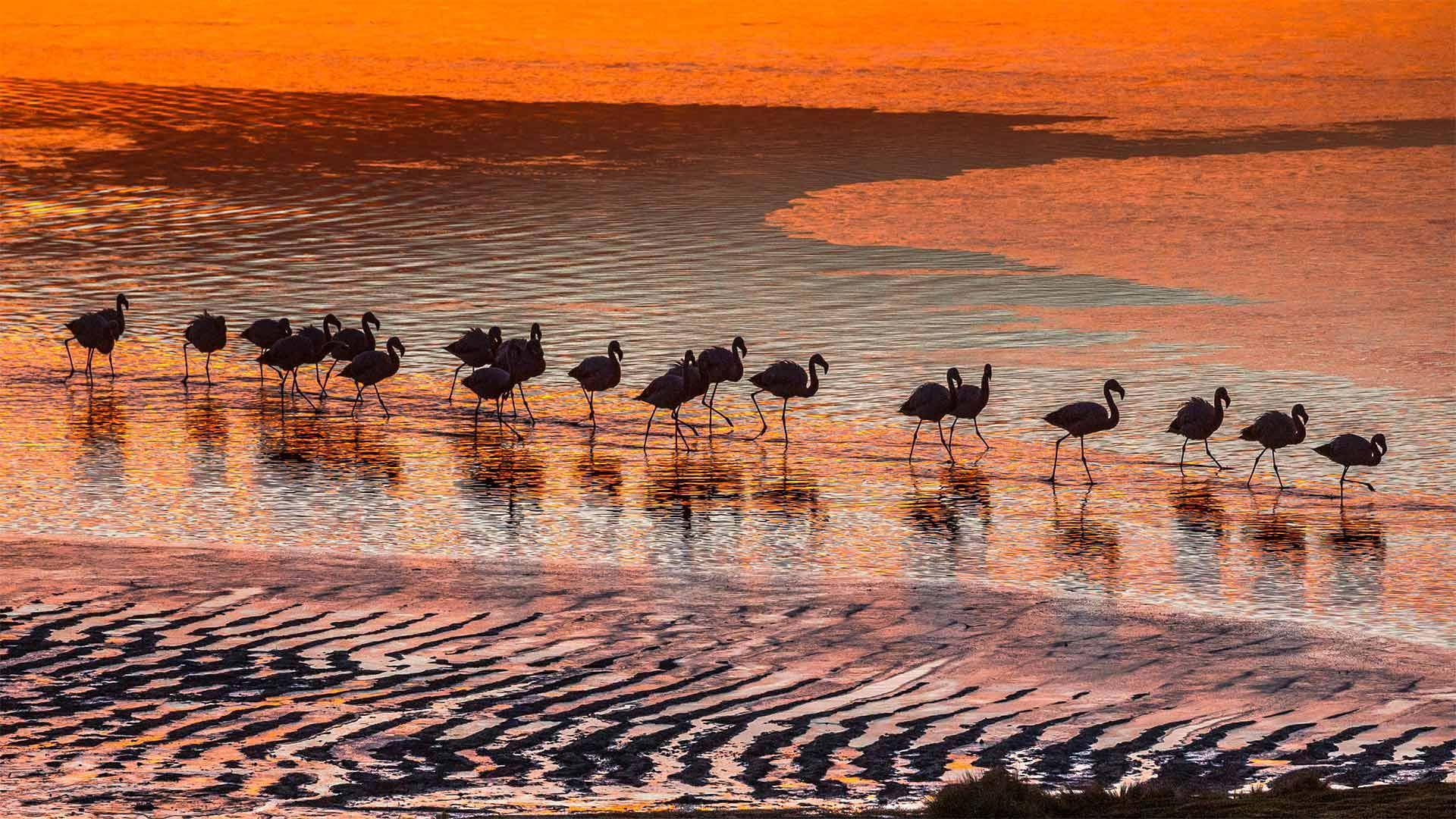 爱德阿都·阿瓦罗·安第斯国家保护区内的火烈鸟火烈鸟