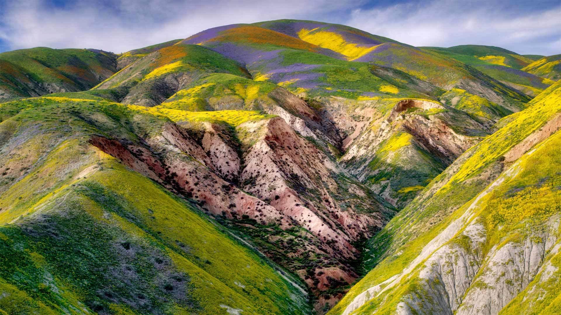 加利福尼亚卡里佐平原国家纪念区的野花加利福尼亚