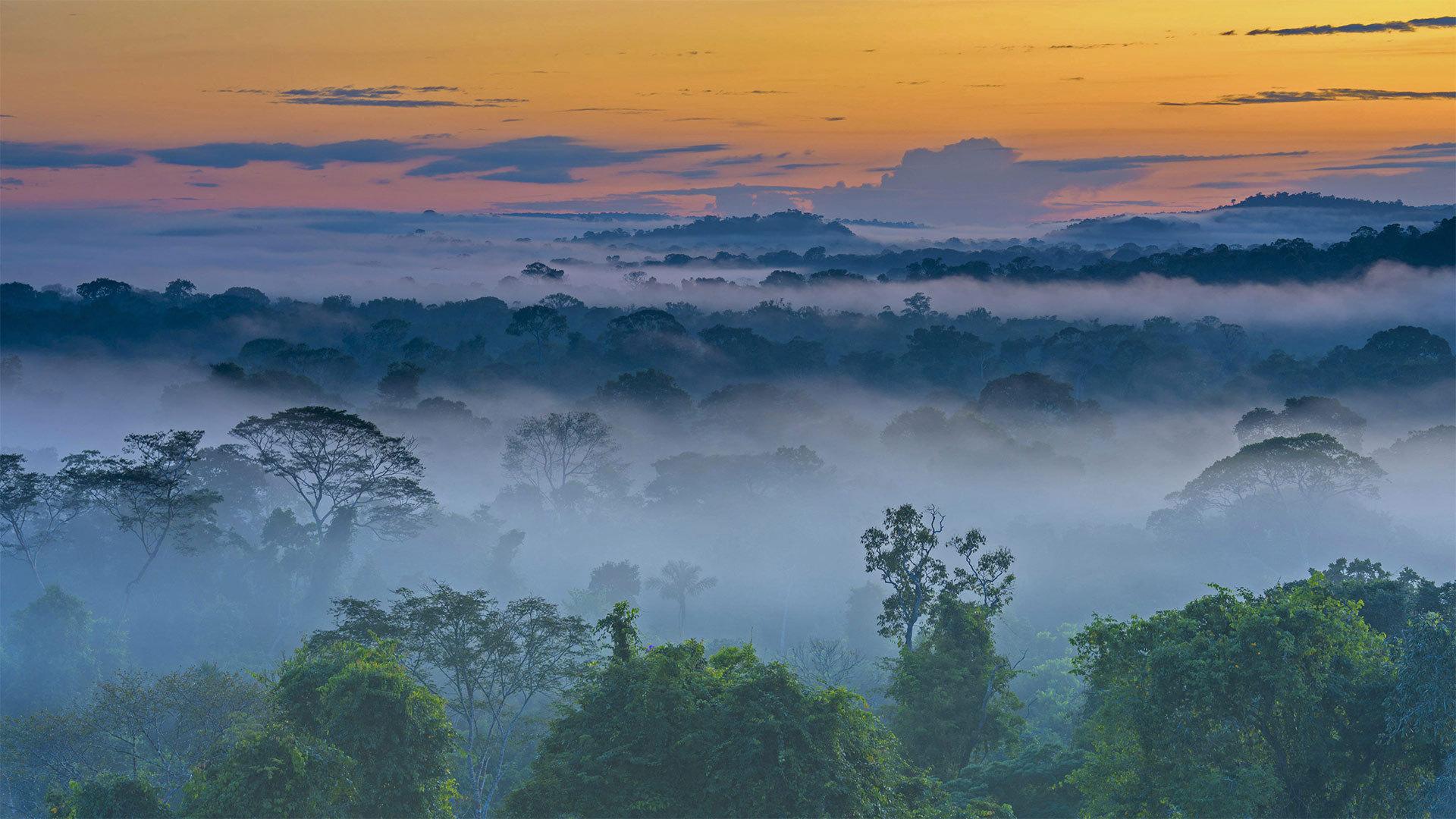 黎明时分晨雾中的亚马逊雨林,上弗洛雷斯塔附近亚马逊雨林