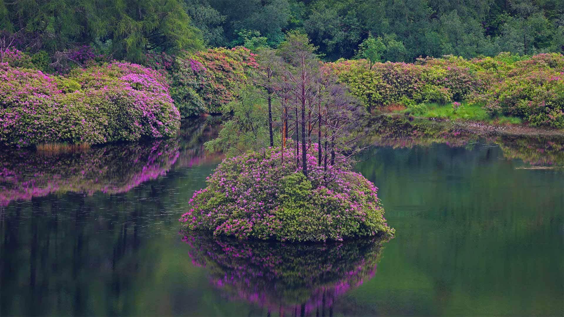 格伦·埃蒂夫盛开着石南花的小湖石南花