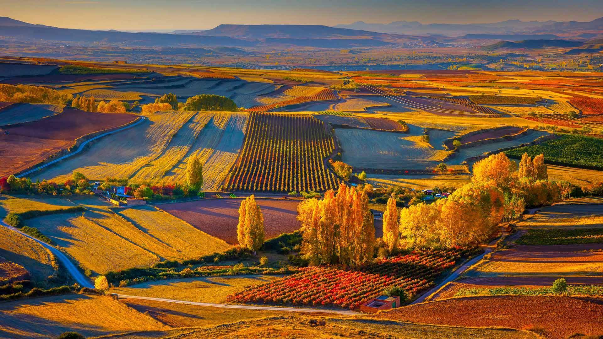 班牙里奥哈区克拉维霍镇附近的秋日景色