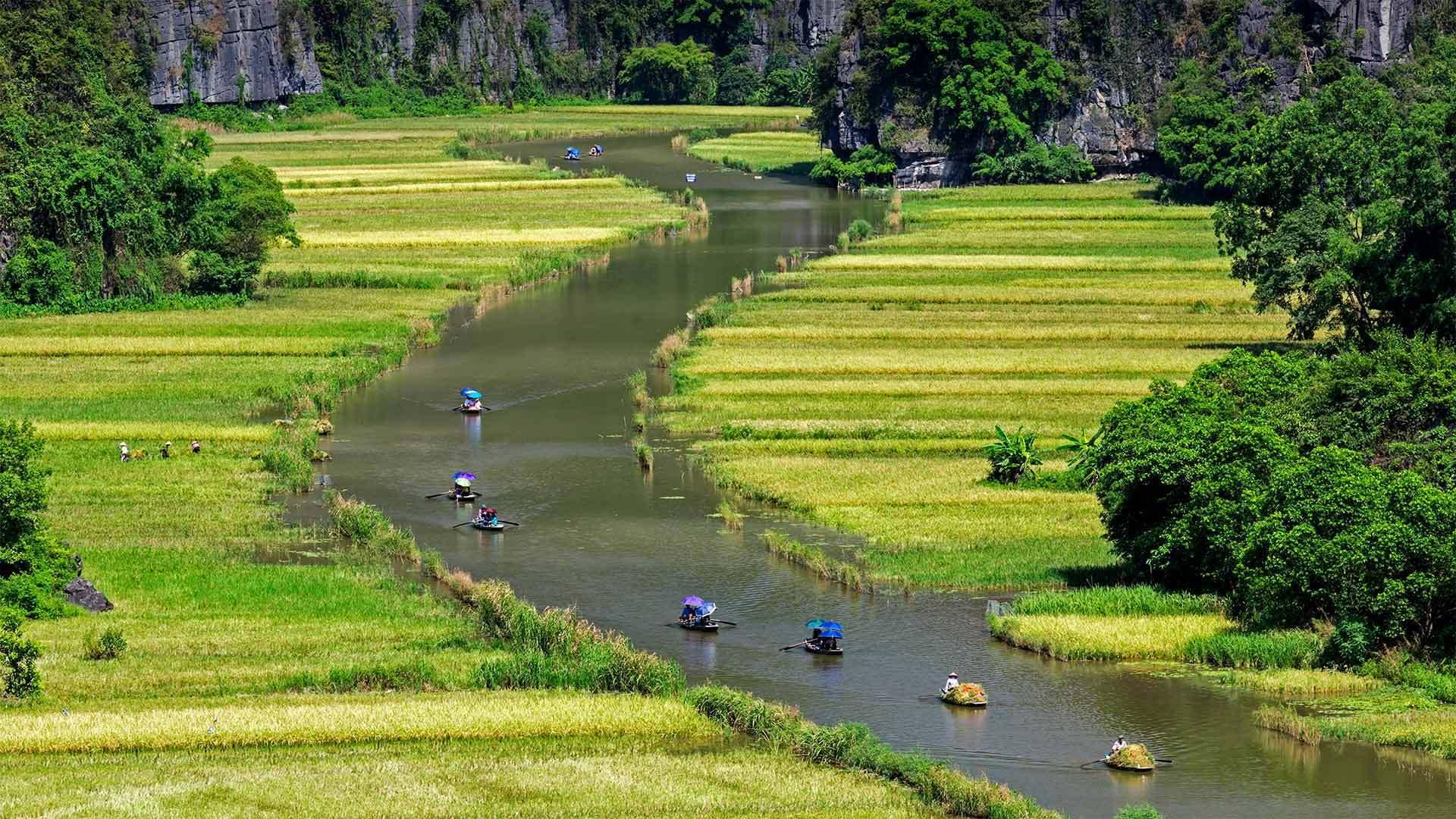 越南宁平吴东河两岸的稻田美景越南宁平