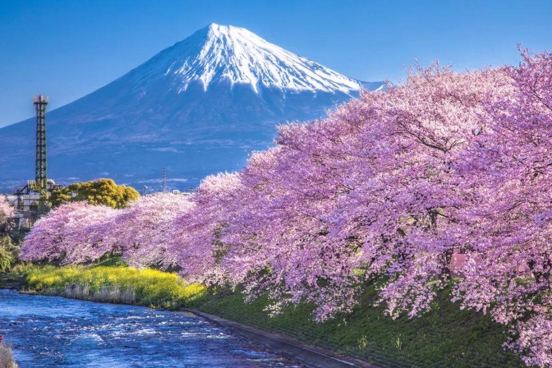 盘点日本旅行一年四季最佳时间避免堵在路上遇到囧途 (8)