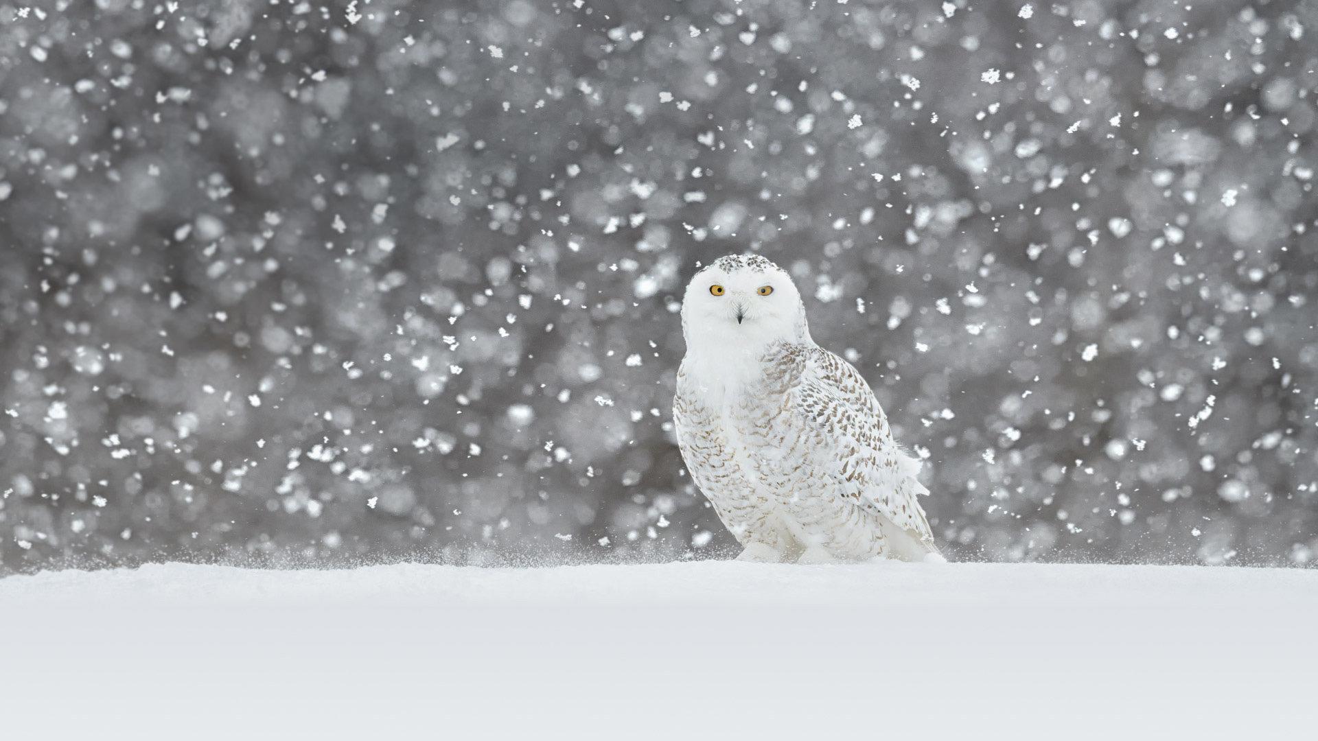 冰天雪地中的洁白天使