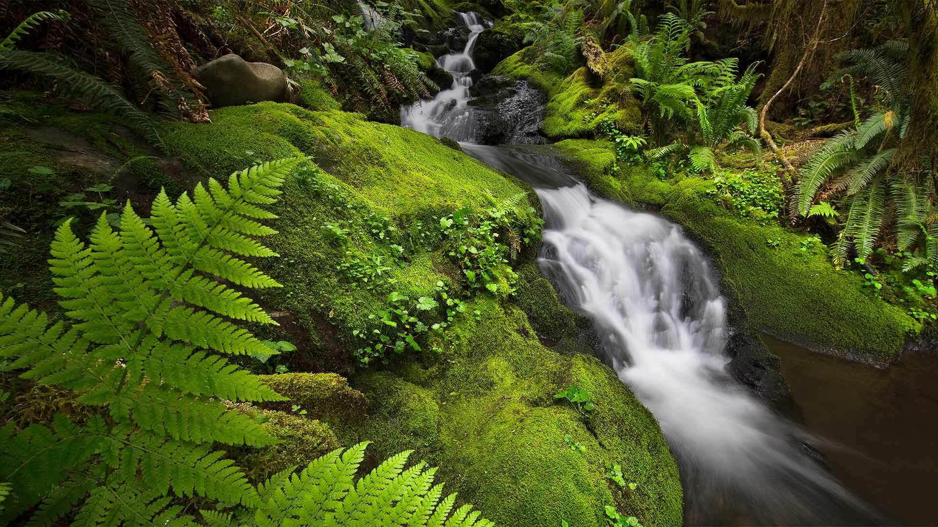 华盛顿奥林匹克国家公园里的奎诺雨林
